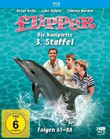 Hollingsworth Morse: Flipper Staffel 3 (Blu-ray), BR