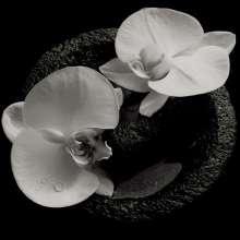 Mike Patton & Jean-Claude Vannier: Corpse Flower (180g) (Limited Edition) (Smokey Swirl Vinyl), LP