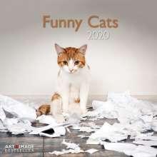 Funny Cats 2020 Broschürenkalender, Diverse
