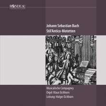 Johann Sebastian Bach (1685-1750): Stil'Antico-Motetten, CD