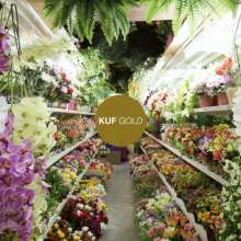 KUF: Gold, CD