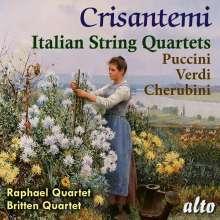 Raphael Quartet / Britten Quartet - Crisantemi, CD