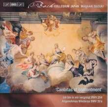 Johann Sebastian Bach (1685-1750): Weltliche Kantaten Vol.10, Super Audio CD