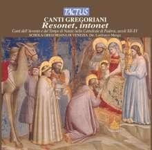 Canto Gregoriano - Resonet intonet, CD