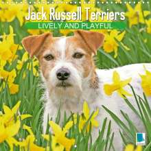 K. A. Calvendo: Jack Russell Terriers: Lively and playful (Wall Calendar 2021 300 × 300 mm Square), Kalender