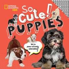 Crispin Boyer: So Cute! Puppies, Buch