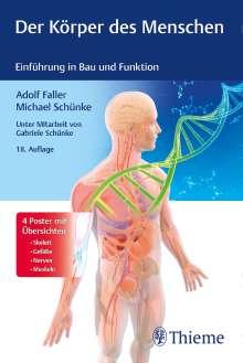 Adolf Faller: Der Körper des Menschen, Buch