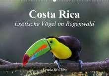 Ursula Di Chito: Costa Rica - Exotische Vögel im Regenwald (Wandkalender 2020 DIN A2 quer), Diverse