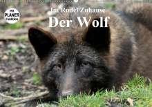 Arno Klatt: Im Rudel Zuhause - Der Wolf (Wandkalender 2020 DIN A2 quer), Diverse