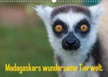 Antje Hopfmann: Madagaskars wundersame Tierwelt (Wandkalender 2021 DIN A3 quer), Kalender