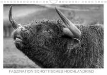 Sigrid Sprengelmeyer: Faszination Schottisches Hochlandrind (Wandkalender 2021 DIN A4 quer), Kalender