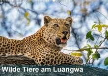 Bruno Pohl: Wilde Tiere am Luangwa (Wandkalender 2021 DIN A2 quer), Kalender
