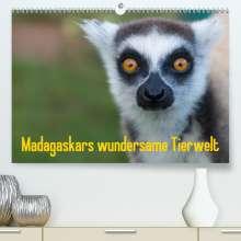 Antje Hopfmann: Madagaskars wundersame Tierwelt (Premium, hochwertiger DIN A2 Wandkalender 2021, Kunstdruck in Hochglanz), Kalender