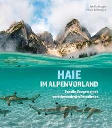 Iris Feichtinger: Haie im Alpenvorland, Buch