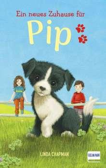 Linda Chapman: Ein neues Zuhause für Pip, Buch