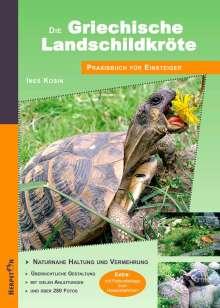 Ines Kosin: Die Griechische Landschildkröte, Buch